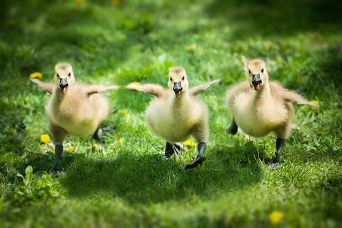 có đôi khi nhìn những động vật nhỏ dễ thương bất giác ta mỉnm cười